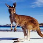 avstraliya6