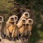 safari-po-dzhunglyam-indii-11-nochey0