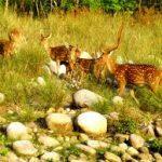 safari-po-dzhunglyam-indii-11-nochey1