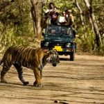safari-po-dzhunglyam-indii-11-nochey2