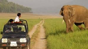 safari-po-dzhunglyam-indii-11-nochey3