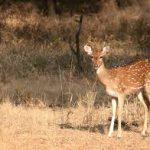 safari-po-dzhunglyam-indii-11-nochey4
