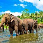 shrilanka-malenkoe-chudo3